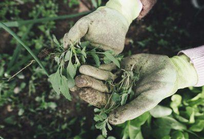 A John Deere segíti az afroamerikai farmerek gazdálkodását